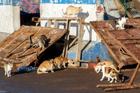 cats at Essaouira Harbor