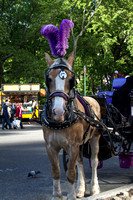 Central Park - Tickles & carriage